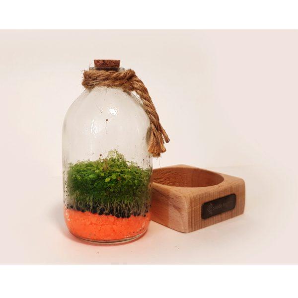گیفت رومیزی همراه با رایحه گیاه طبیعی 2