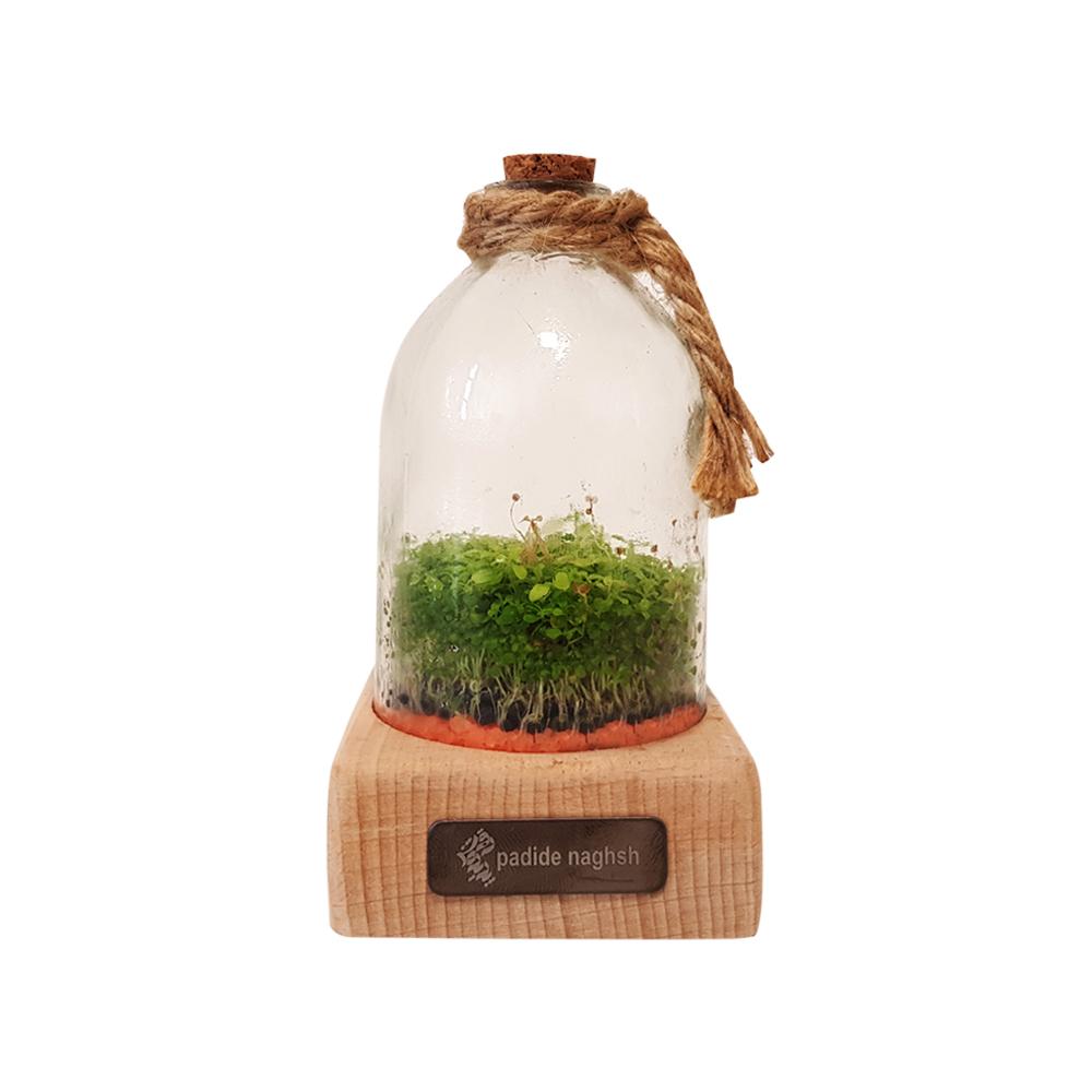 گیفت رومیزی همراه با رایحه گیاه طبیعی